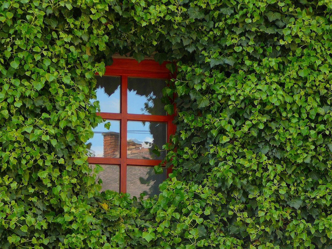 Remplacer une fenêtre sans faire de casse, les étapes à suivre